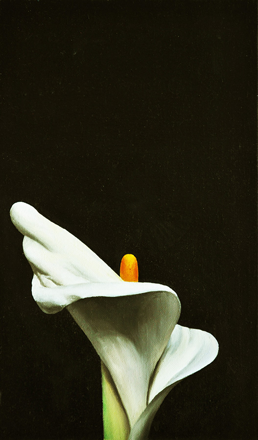 Lily (41x24cm) oil on canvas
